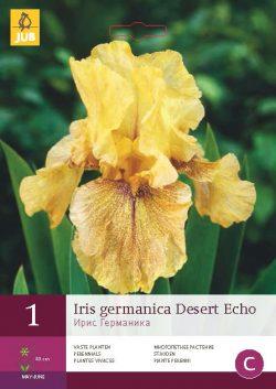 Iris Germanica Desert Echo 1st.