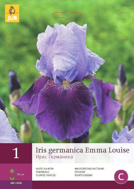 Iris Germanica Emma Louise 1st.