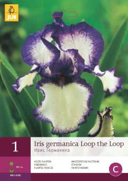 Iris Germanica Loop The Loop 1st.