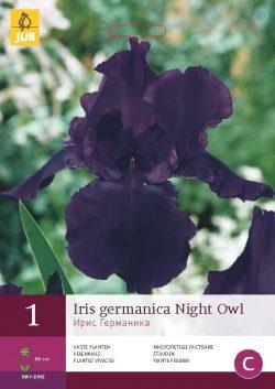 Iris Germanica Night Owl 1st.
