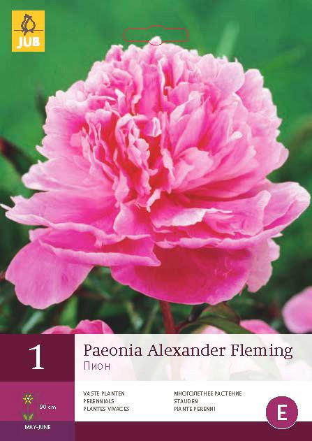 Pioenroos Alexander Fleming 1st.