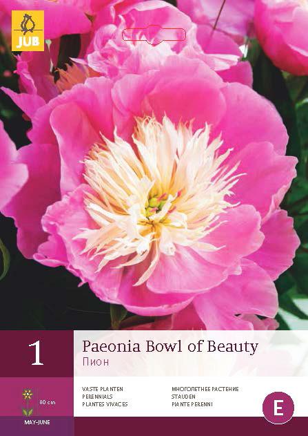 Pioenroos Bowl Of Beauty 1st.