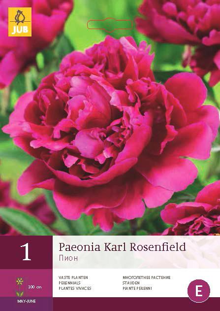 Pioenroos Karl Rosenfield 1st.