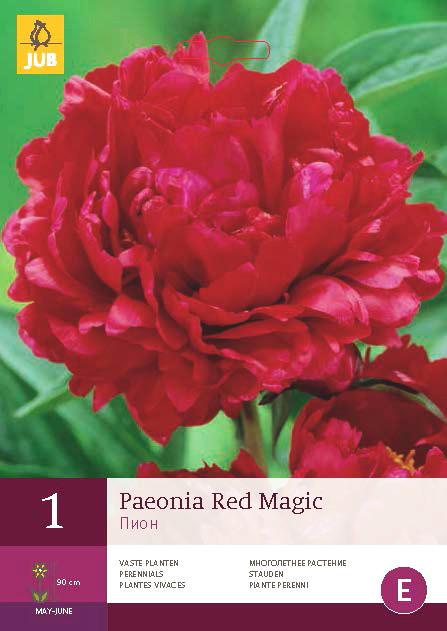 Pioenroos Red Magic 1st.