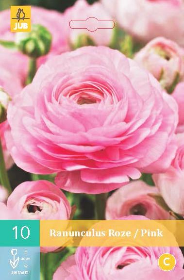 Ranonkel Roze 10st.