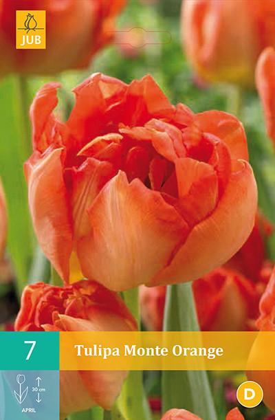 Tulpen Monte Orange 7st.