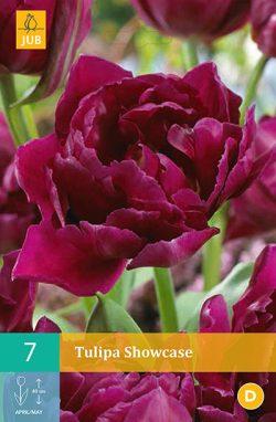 Tulpen Showcase 7st.