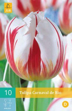 Tulpen Carnaval De Rio 10st.