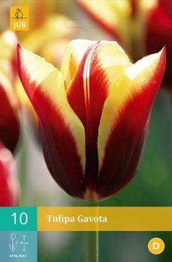 Tulpen Gavota 10st.