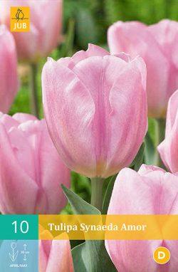 Tulpen Synaeda Amor 10st.