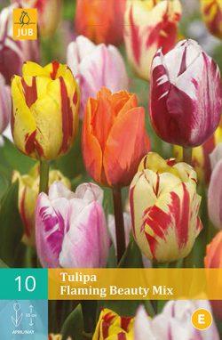 Tulpen Flaming Beauty Mix 10st.