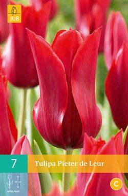 Tulpen Pieter De Leur 7st.