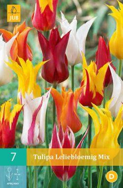 Tulpen Leliebloemig 7st.