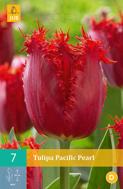 Tulpen Pacific Pearl 7st.