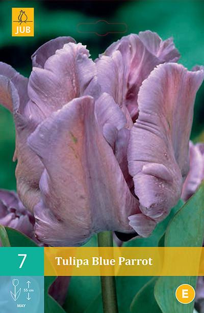 Tulpen Blue Parrot 7st.