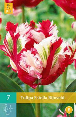 Tulpen Estella Rijnveld 7st.