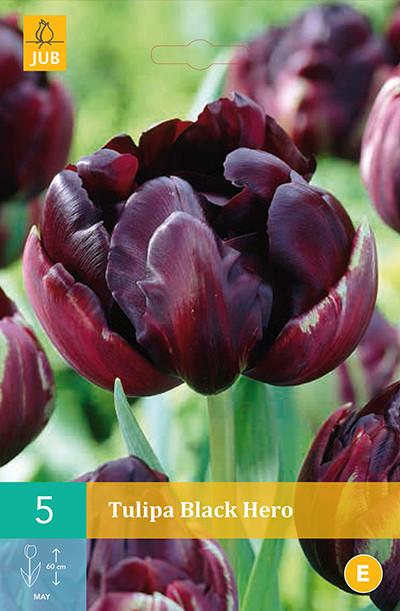 Tulpen Black Hero 5st.