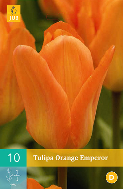 Tulpen Orange Emperor 10st.