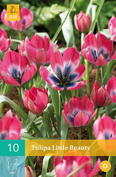 Tulpen Little Beauty 10st.