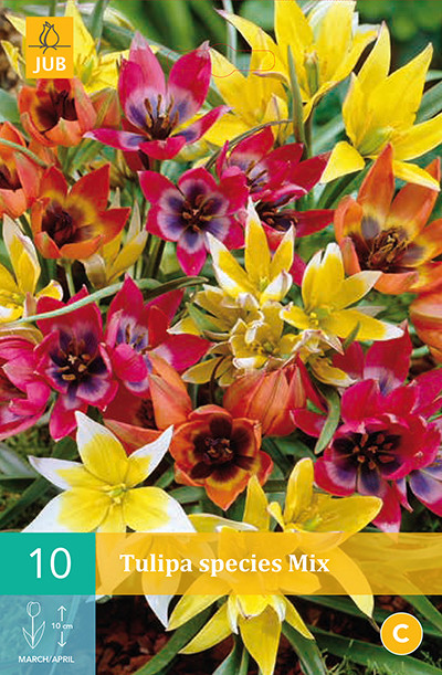 Tulpen Species Mix 10st.