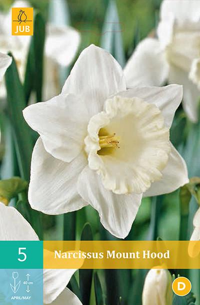 Narcissus Mount Hood 5st.