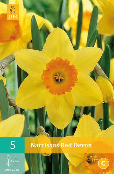 Narcissus Red Devon 5st.
