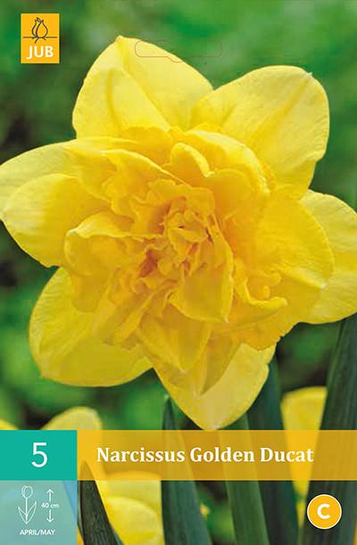 Narcissus Golden Ducat 5st.