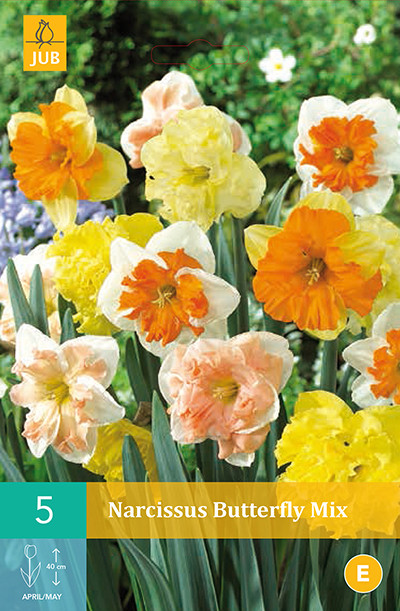 Narcissus Butterfly Mix 5st.