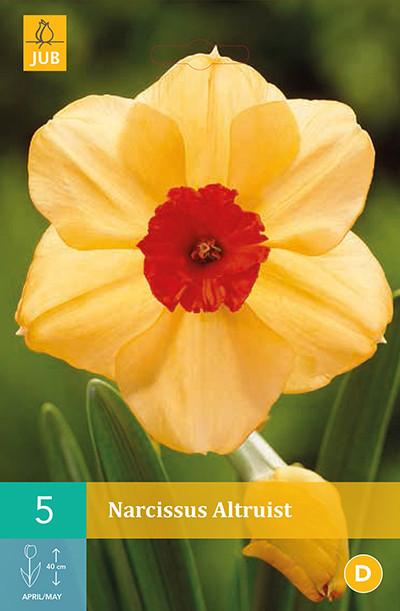 Narcissus Altruist 5st.