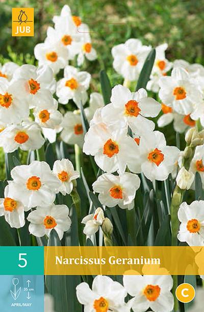 Narcissus Geranium 5st.