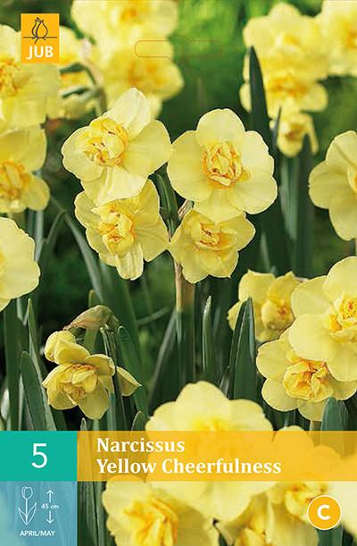 Narcissus Yellow Cheerfulness 5st.