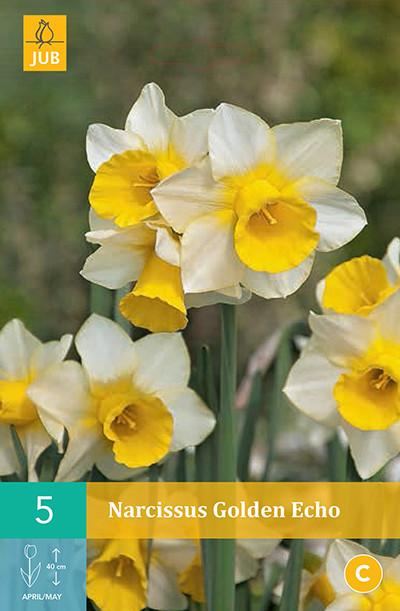 Narcissus Golden Echo 5st.