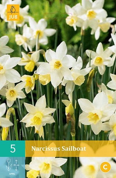 Narcissus Sailboat 5st.