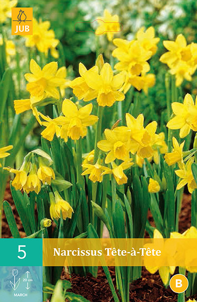 Narcissus Tete A Tete 5st.