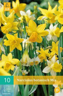 Narcissus Botanisch 10st.