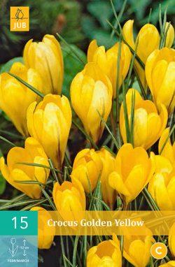 Krokus Golden Yellow 15st.