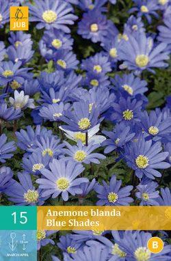 Anemoon Blanda Blue Shades 15st.