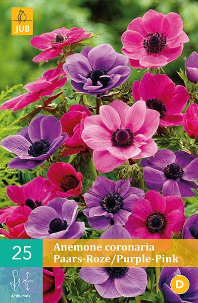 Anemoon Coronaria Paars Mix 25st.