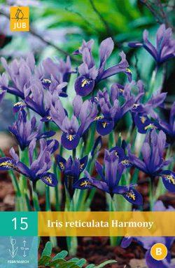 Iris Harmony 15st.