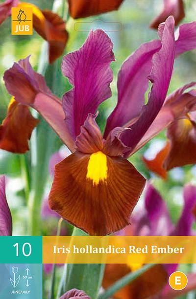 Iris Red Ember 10st.