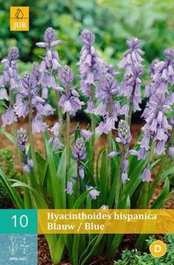Hyacinthoïdes Hispanica Blauw 10st.