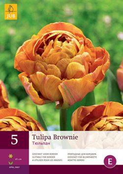 Tulpen Brownie 5st.