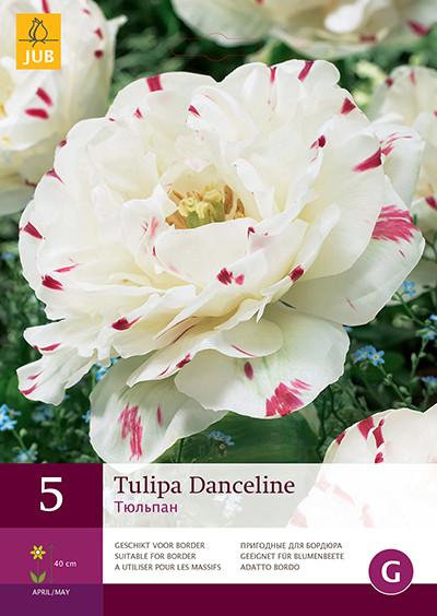 Tulpen Danceline 5st.