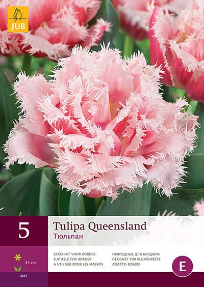 Tulpen Queensland 5st.