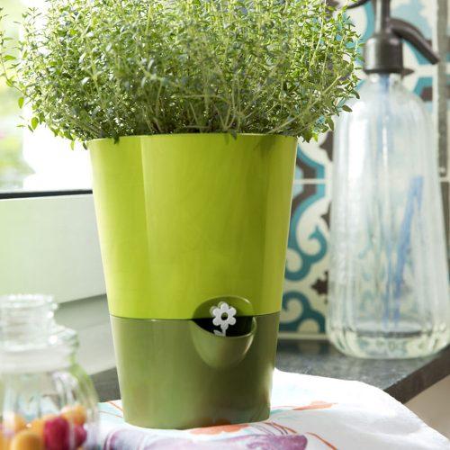 Kruidenpot kweekset groen