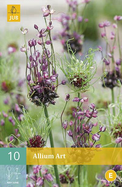 Allium Art 10st.