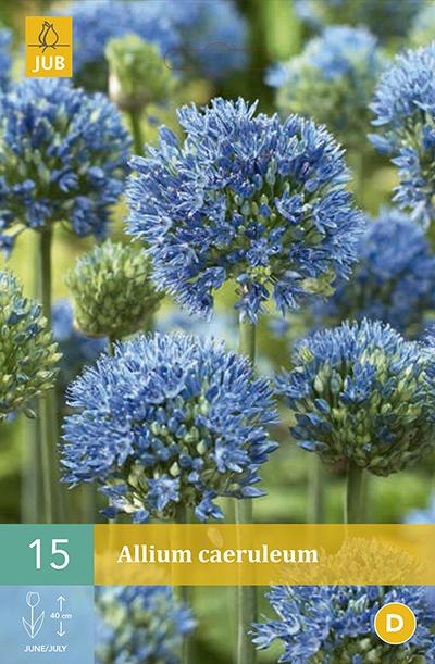 Allium Caeruleum 15st.