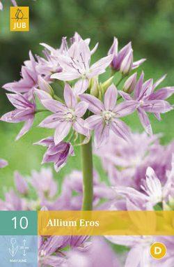 Allium Eros 10st.