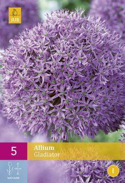 Allium Gladiator 5st.