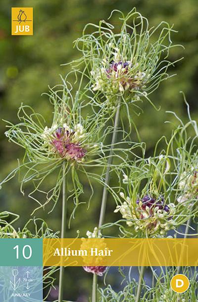 Allium Hair 10st.
